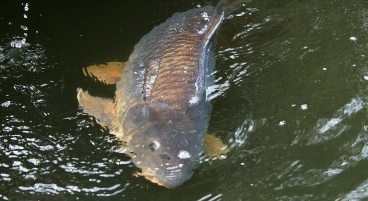 Neuvěřitelný výsledek: anglický rybář ulovil 1418 kg ryb za 6 dnů