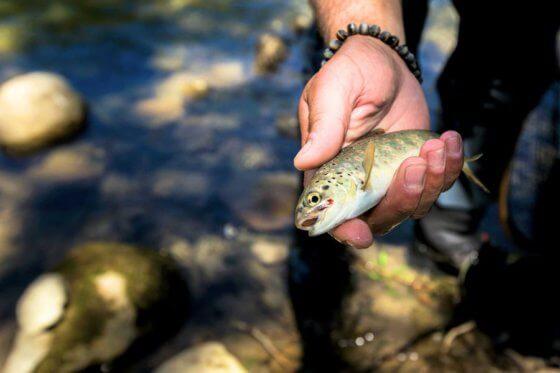 Jedinečné a divoké řeky v Bosně bojují o přežití