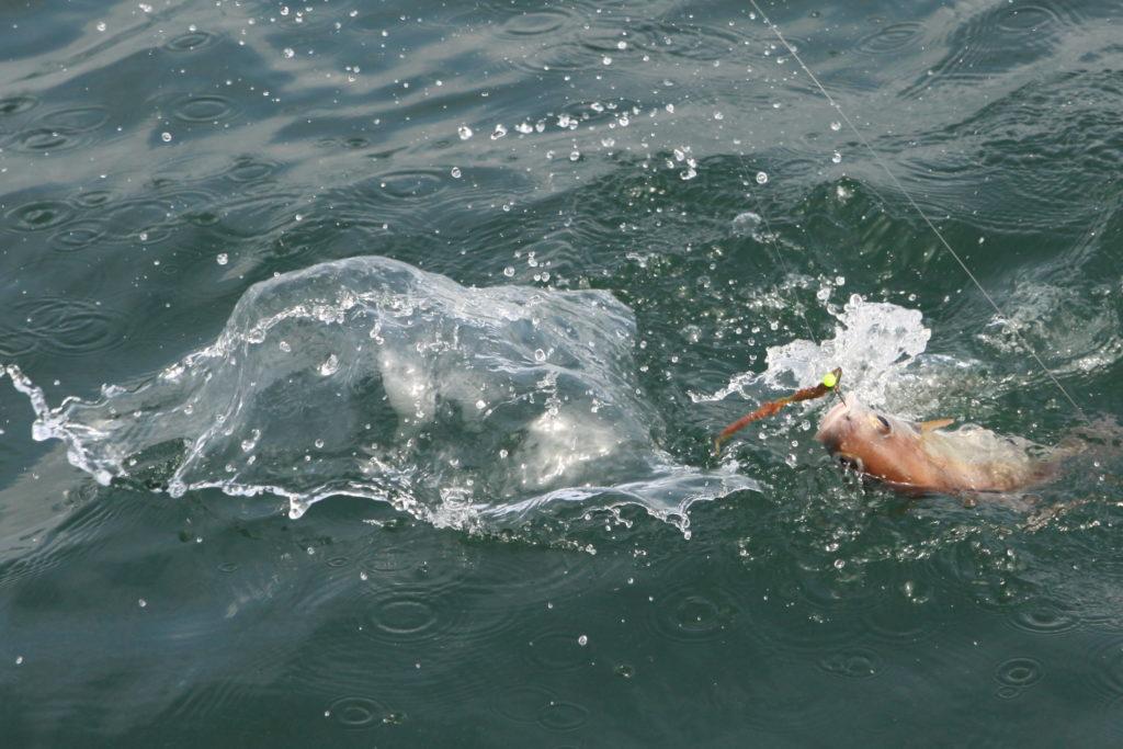 OBRAZEM: Rybaření v jihozápadní Anglii – lov ze břehu