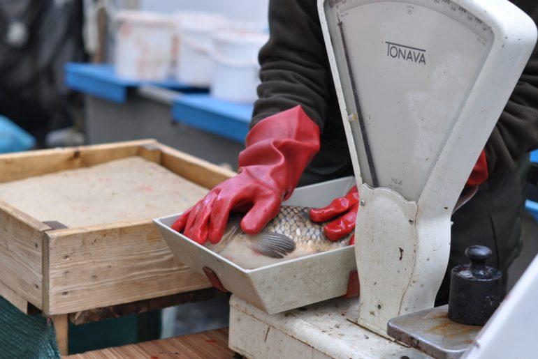 Rybář na Vánoce kapra nekupuje! Manželku vysvobodil až budoucí zeť