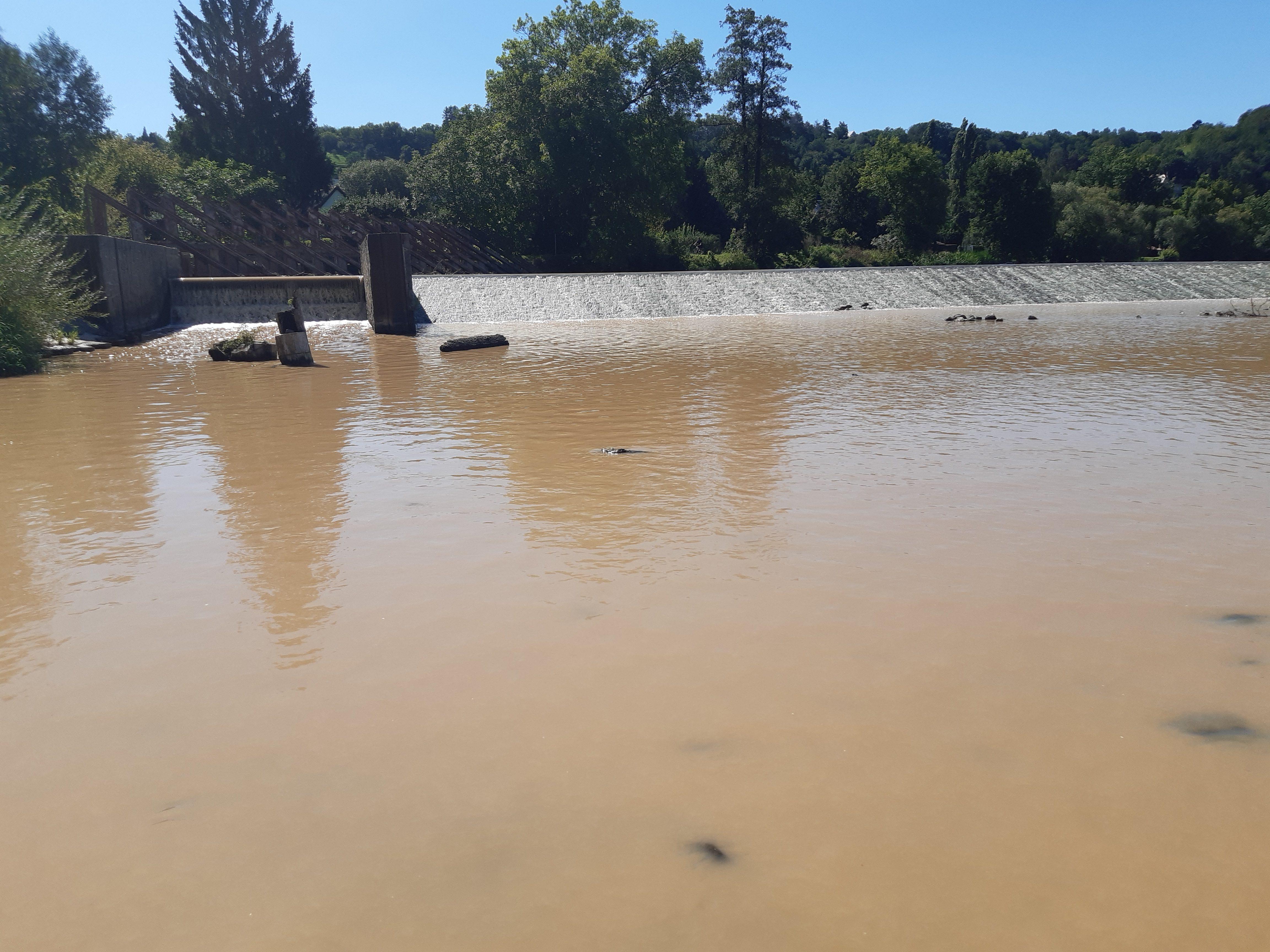 Kontaminovaná voda postupuje do Berounky. Ryby z řeky mohou být zdraví nebezpečné!