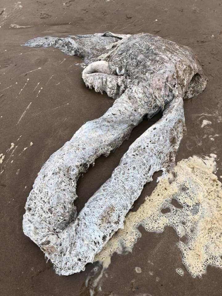 Moře vyplavilo neznámý objekt. Je to část velryby, úhoř nebo mimozemšťan?