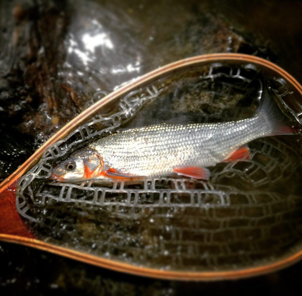 Kam na ryby? Sázava v Soběšíně je ideální na výlet s dětskými rybáři