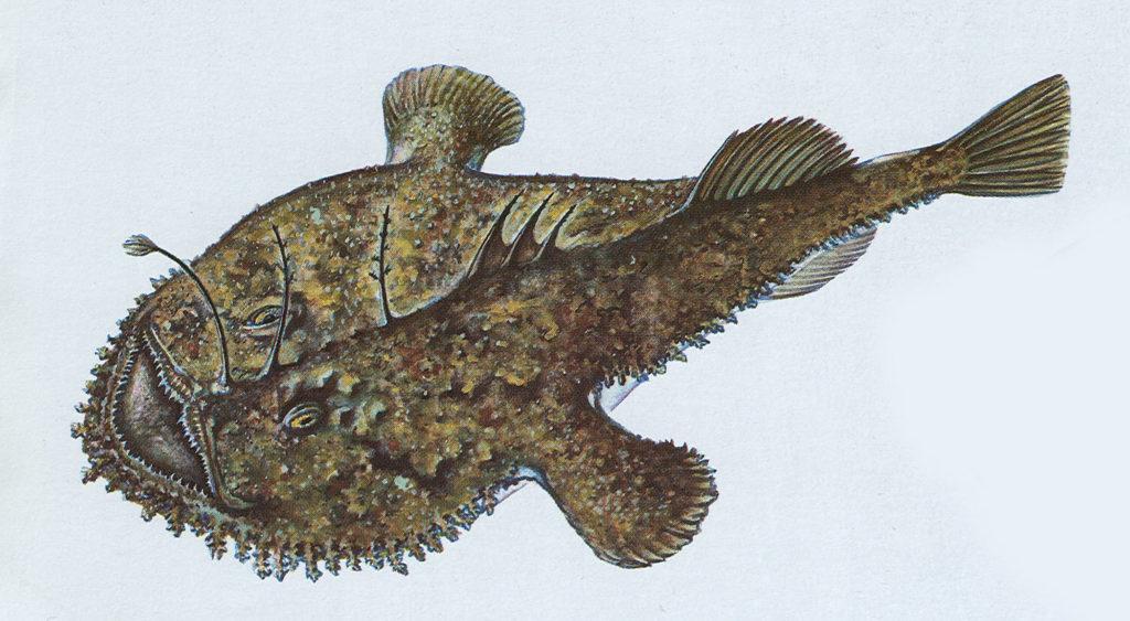 """Jak ryby používají své """"nástrahy"""""""