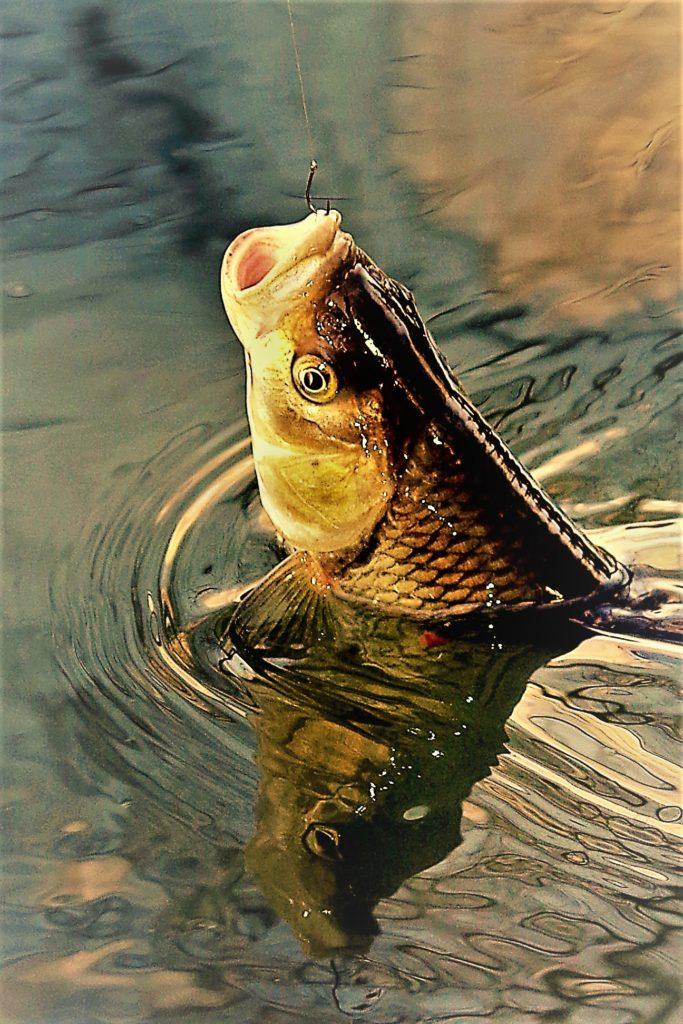 Na rybách za školou. Pomohlo jim k tomu včelí bodnutí