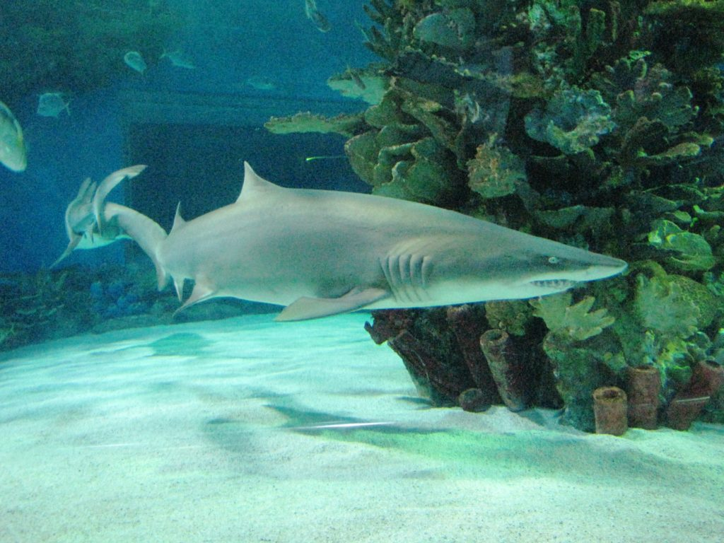OBRAZEM: Potápění se žraloky v obřím akváriu