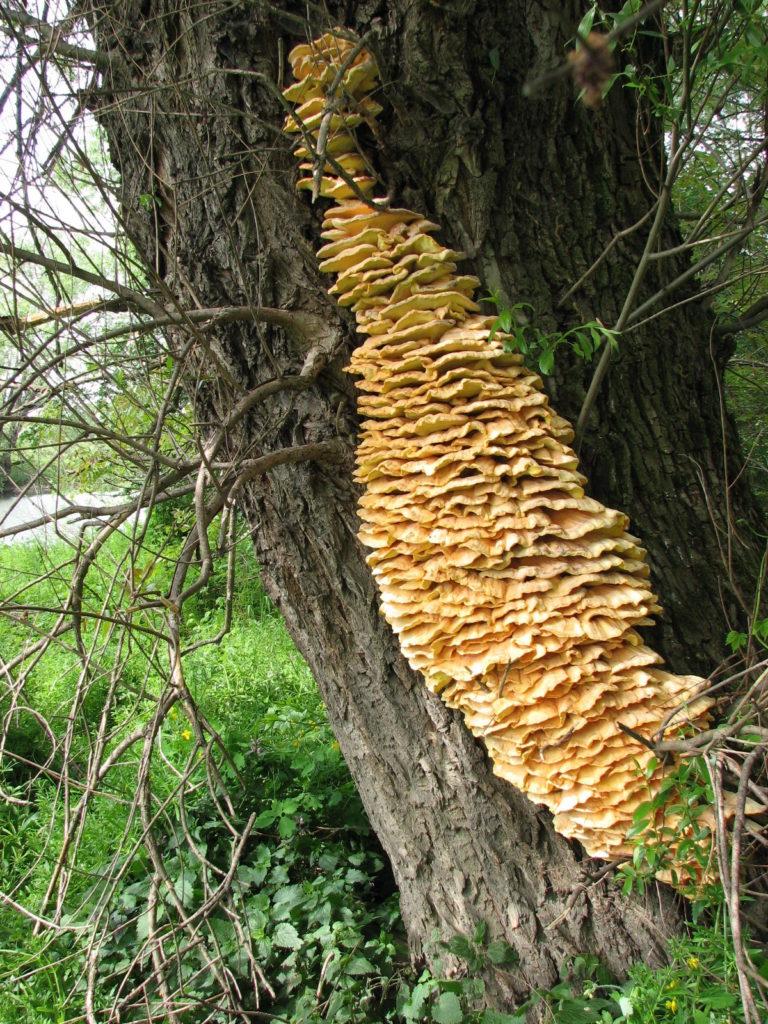 S udicí na houby, aneb Když neberou, možná rostou