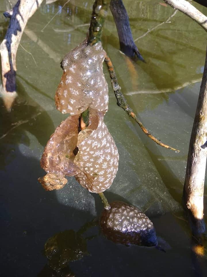 Rybář vylovil ošklivou, rosolovitou kouli. Víte, co je zač?