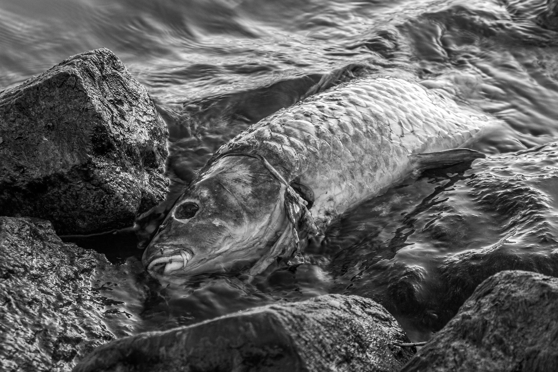 Do Bečvy unikla neznámá látka, zabila velké množství ryb