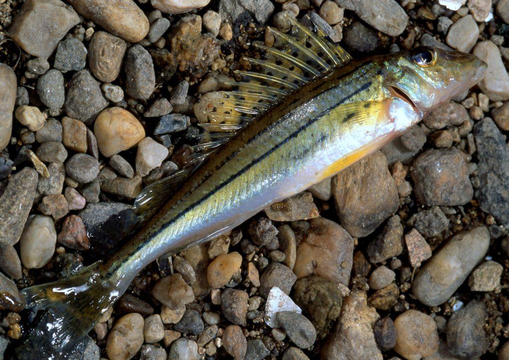 Poznávačka rybích druhů. Téměř nikdo nepozná všechny! Zvládnete to vy?
