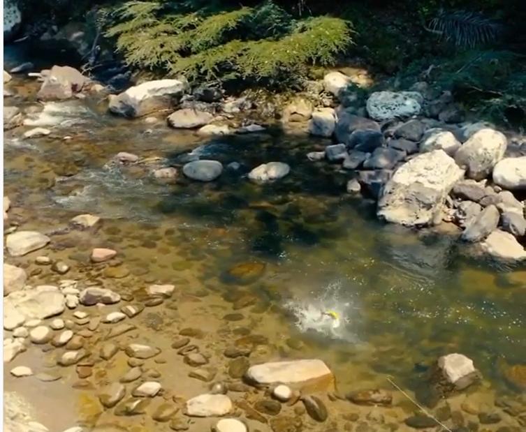 Unikátní video záběru dorada z ptačí perspektivy. To musíte vidět!