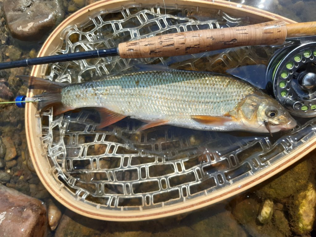 Poznávačka o hodnotnou cenu. Znáte dobře české ryby?