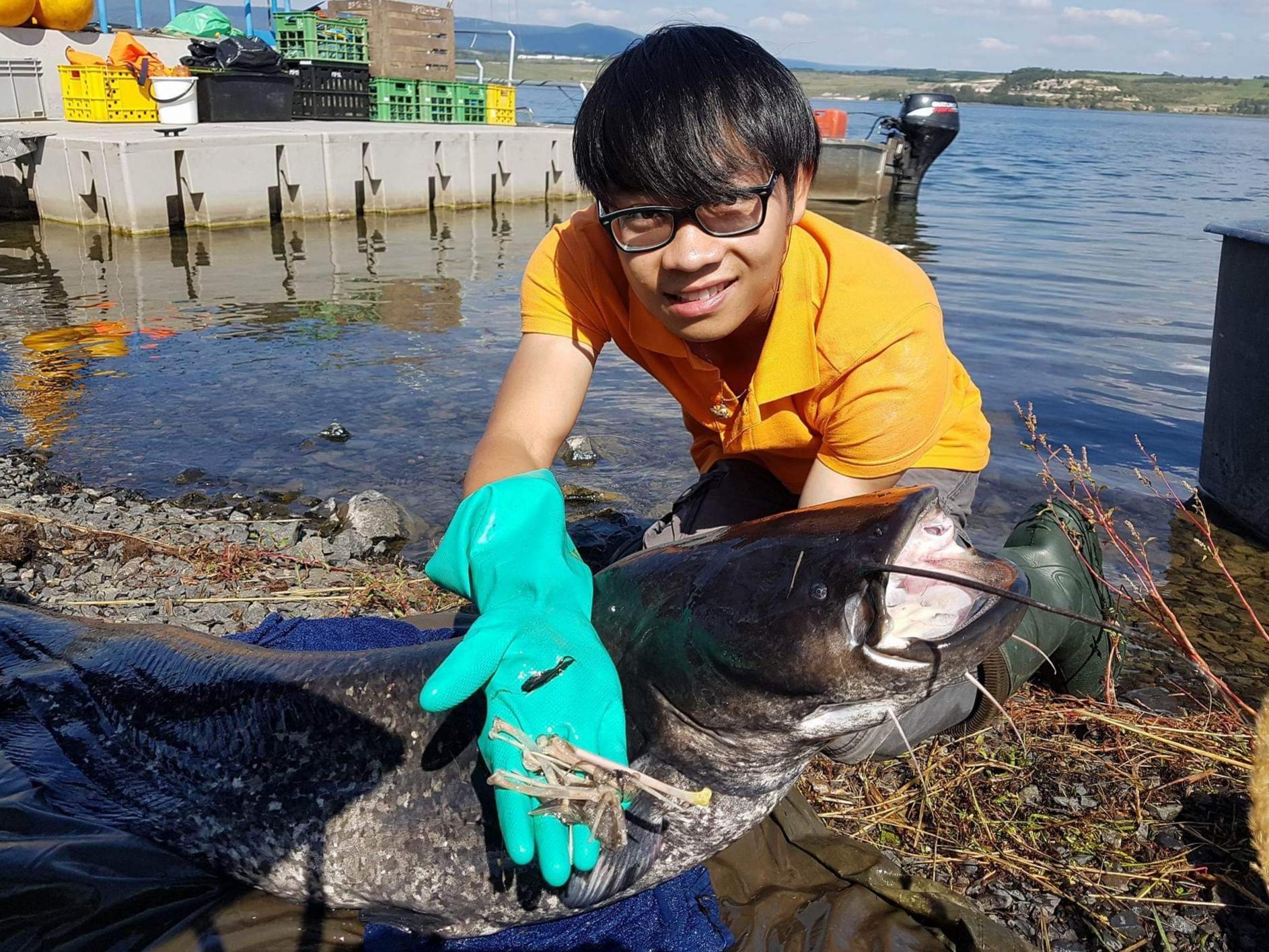 Šonova hodina rybářské vietnamštiny: Cá Nheo ăn vịt [ka-ňeo-an-vit] = Sumec kachnožravec