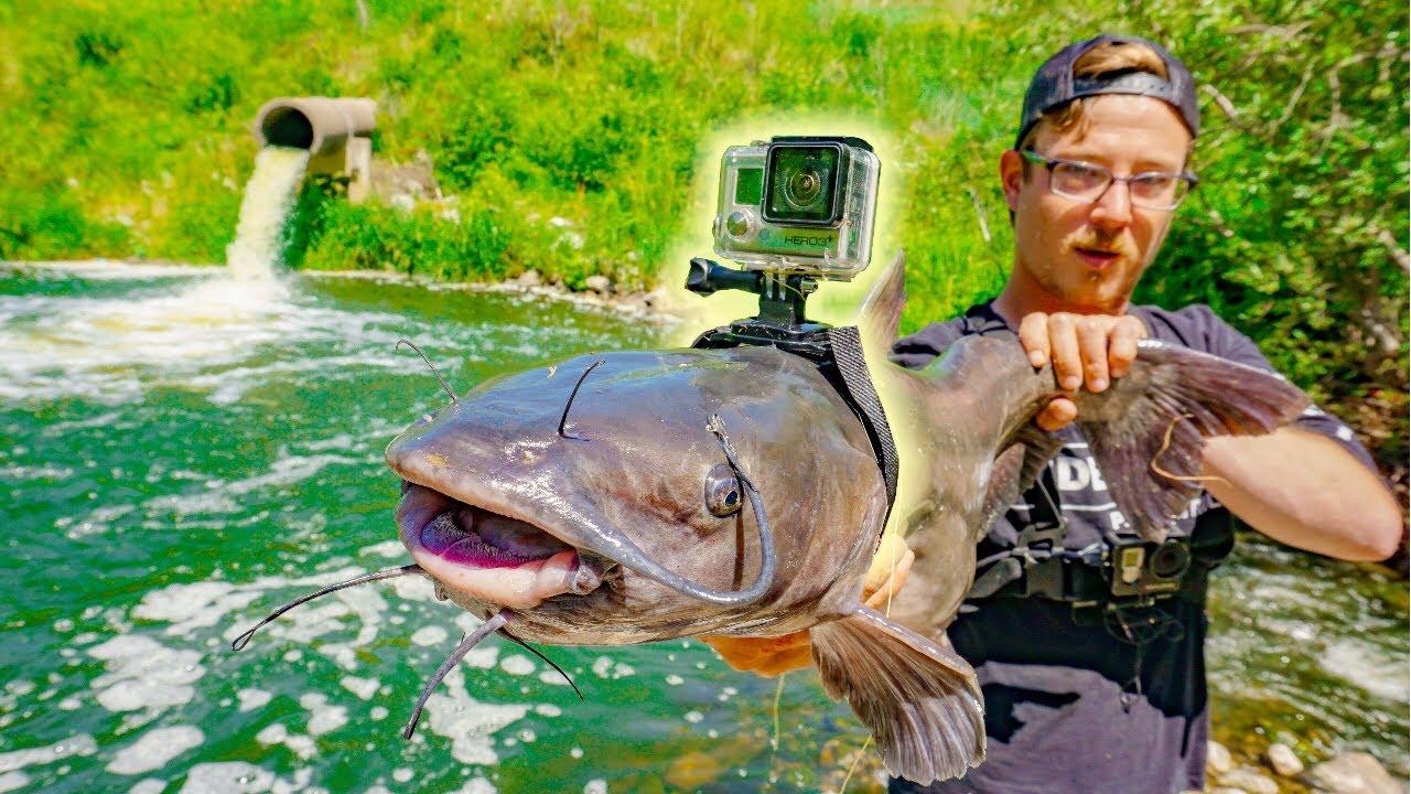 Rybáři přidělali kameru na sumečka. Co následovalo?