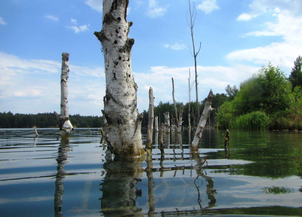Obrazem: Zatopený les plný ryb