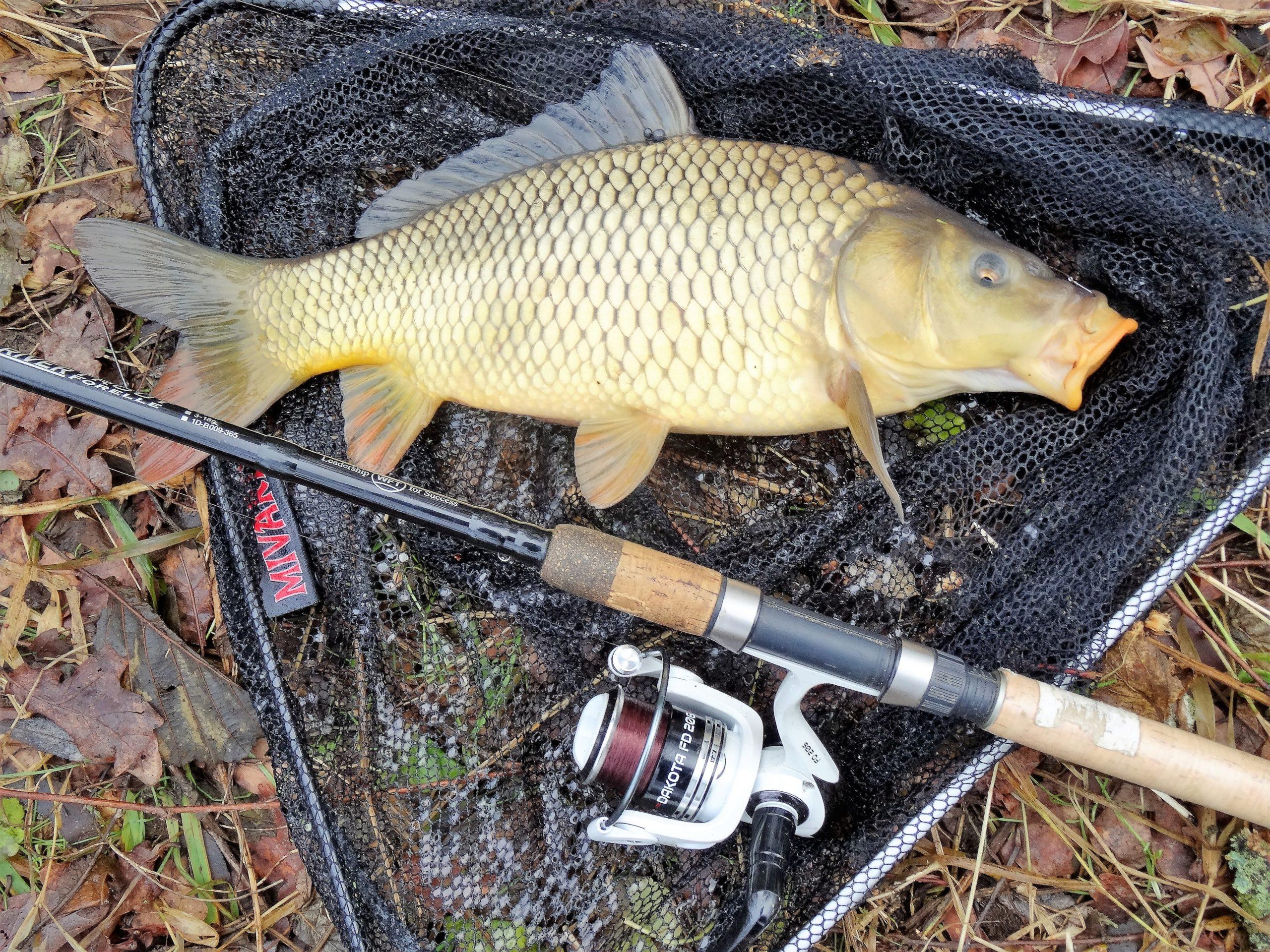 Vánoční lov kaprů. Kam vyrazit, když jsou rybníky zamrzlé? (2)