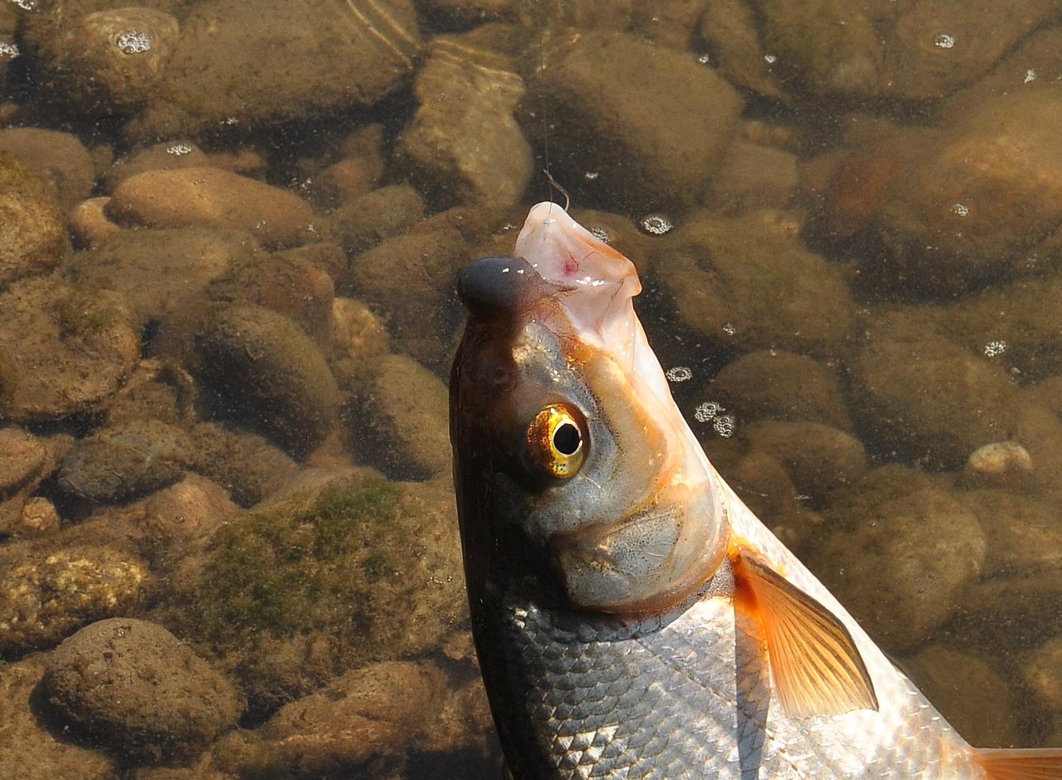 Jak fotografovat ryby aneb Několik vychytávek pro amatéry (1)