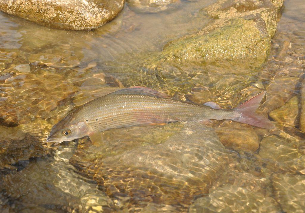 Jak fotografovat ryby aneb Několik vychytávek pro amatéry (2)