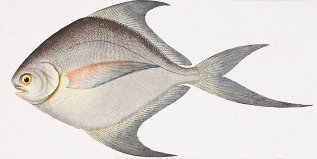 Jak ryby reagují na různé zvuky a vibrace