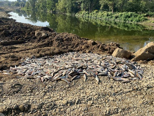 Otrava Bečvy: Inspekce životního prostředí selhala, ředitelé přesto dostali odměny více než 1,6 milionu korun