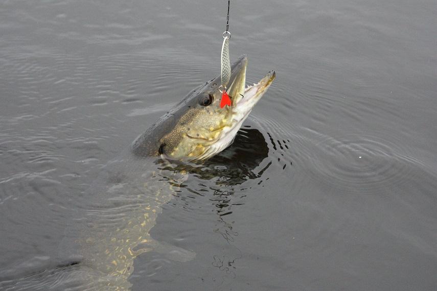 Květnové Rybářství: Patnáct let lovu štik ve Švédsku