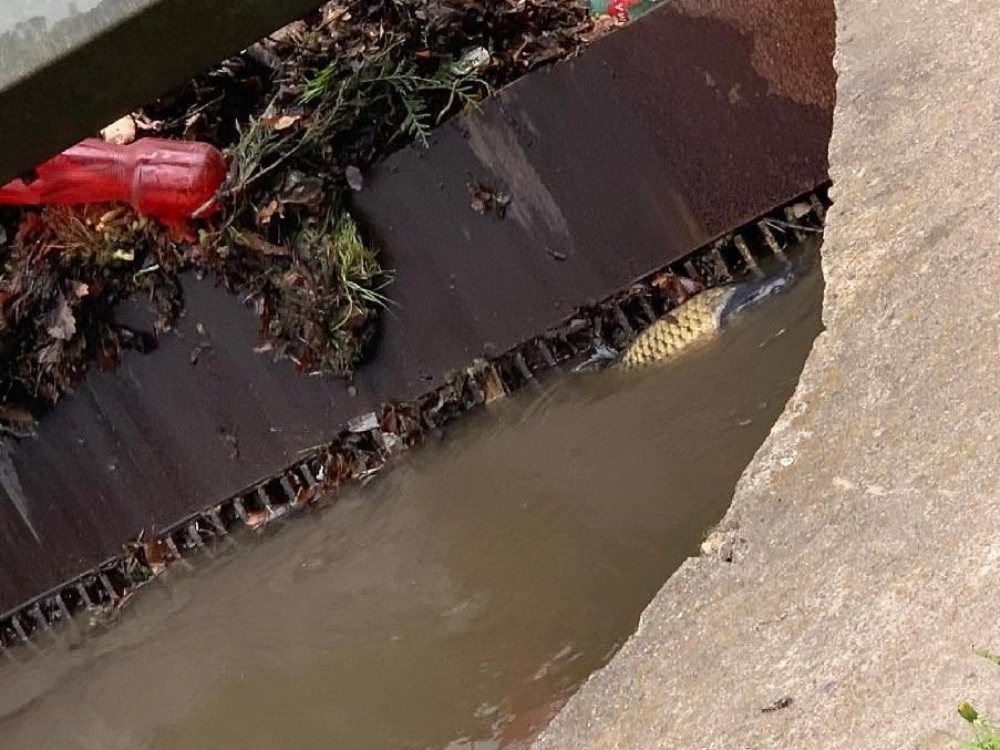 Další tragická otrava: Řeka Bílina zapáchá po zatím neznámé látce, ryby hromadně hynou