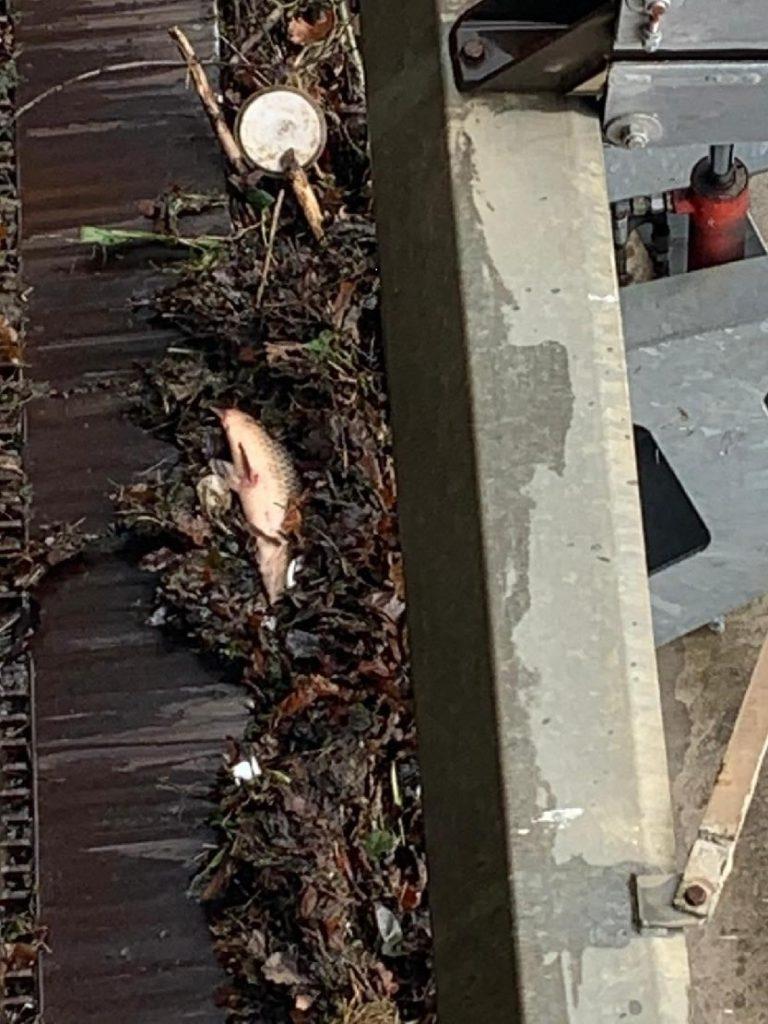 Petice za objasnění úhynu ryb v Bílině: Nechceme, aby se opakovala Bečva!