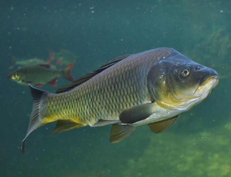 Nejenom ryba byla postním jídlem