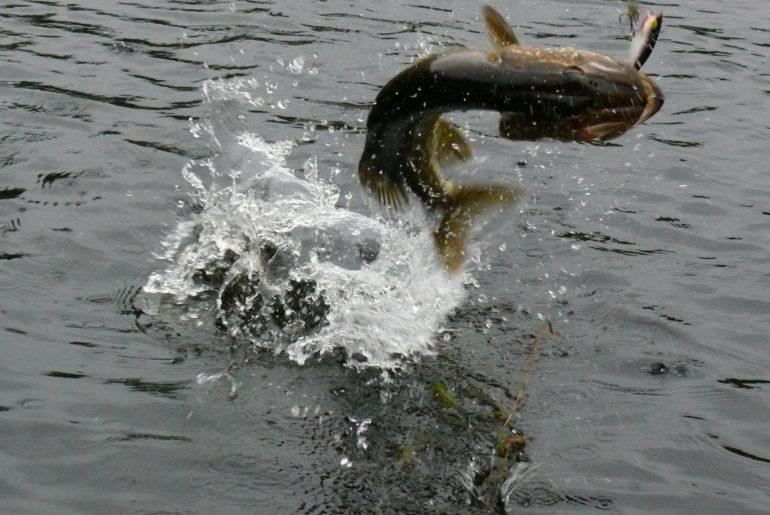 Test rybářských znalostí: Můžete bez obav vyrazit na dravce?