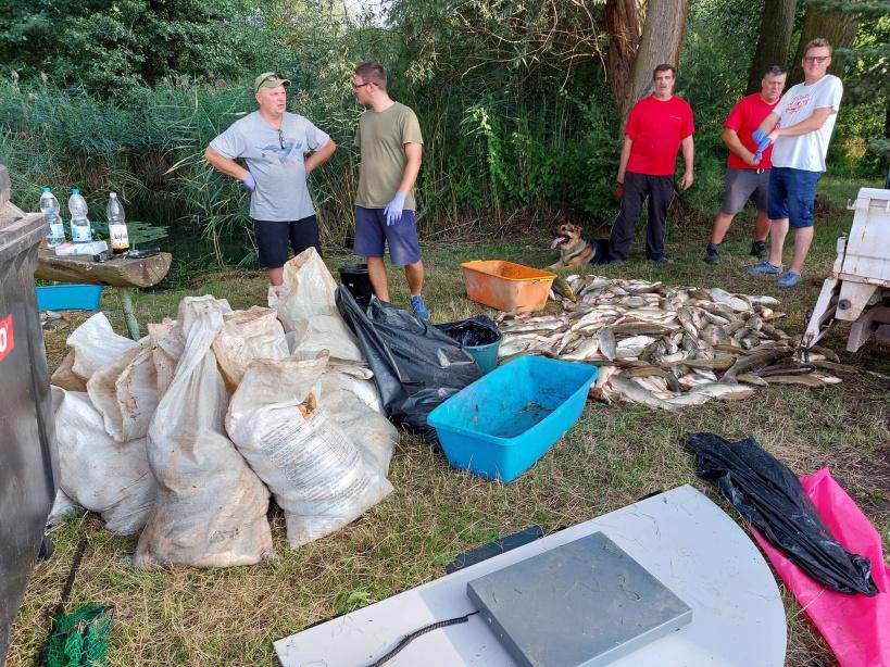 Svědectví rybářů z otráveného Hronu: Do nohou vám narážejí desítky mrtvých ryb, které unáší proud. Celkem jich byly skoro dvě tuny