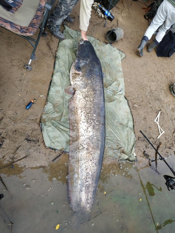 """""""Souboj se sumcem o délce 220 cm trval skoro 40 minut,"""" popisuje šťastná rybářka"""