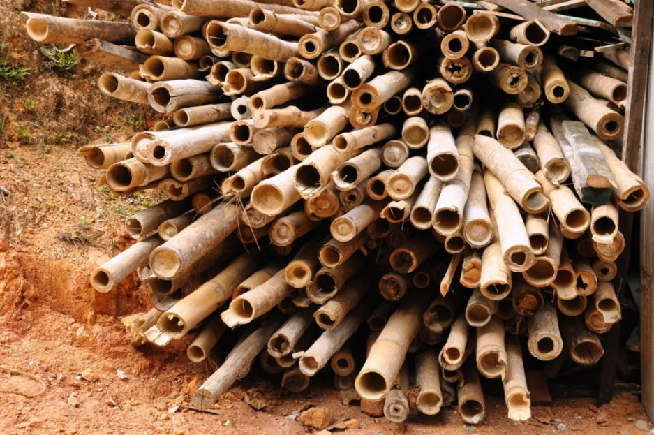 Bambus, průkopník při výrobě rybářských prutů