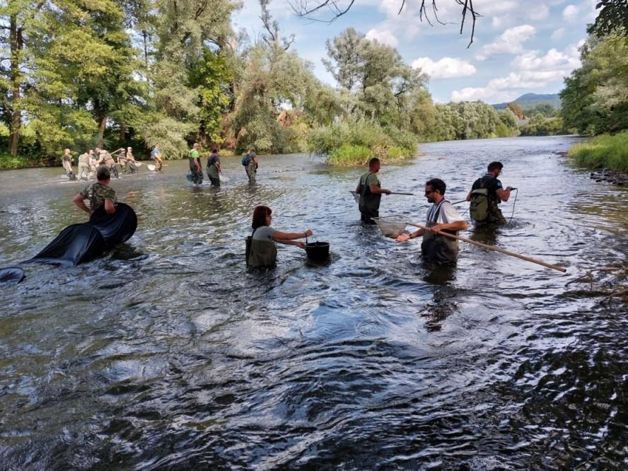 Otrávený Hron: V řece není žádný život, zmizel i zoobentos