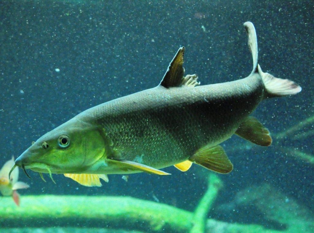 Jak rychle plavou ryby?
