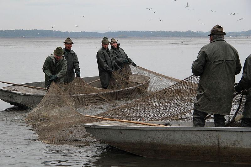 Výlov největšího českého rybníka nebude ani letos pro veřejnost