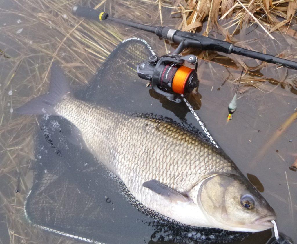 Nový rok. Vyrazit na ryby, nebo zůstat v teple domova?