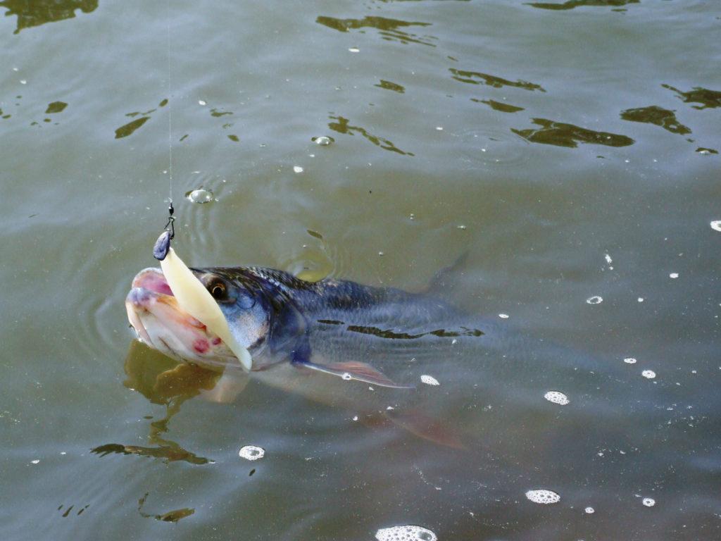Kde najdeme ryby a jak je ulovíme: Přítoky (1)