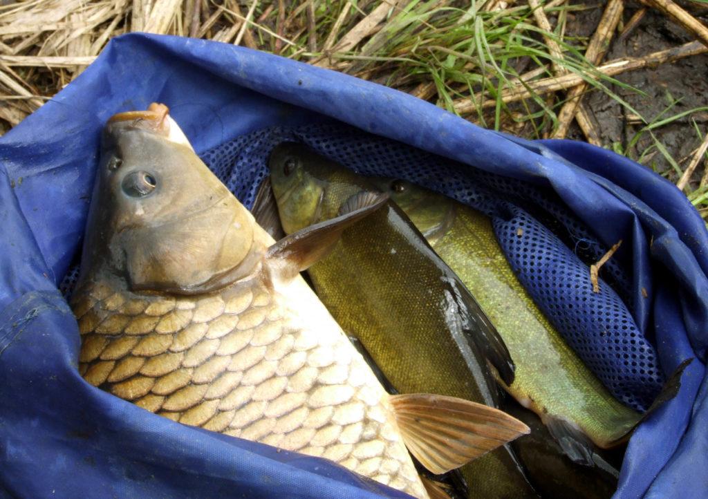 Kde najdeme ryby a jak je ulovíme: Přítoky (2)