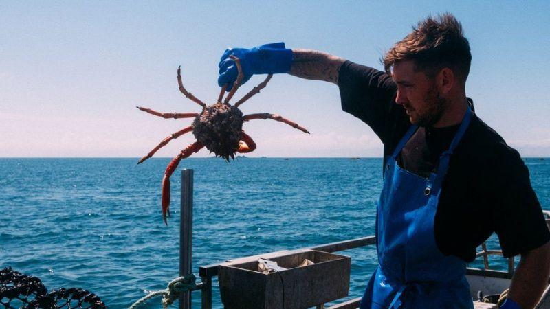 Rafinovaná finta britských rybářů: Nepozřete pavoučího kraba? Zkuste radši královského!