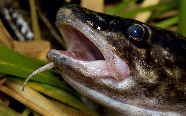 Test rybářských znalostí: Jak dobře znáte doby hájení?