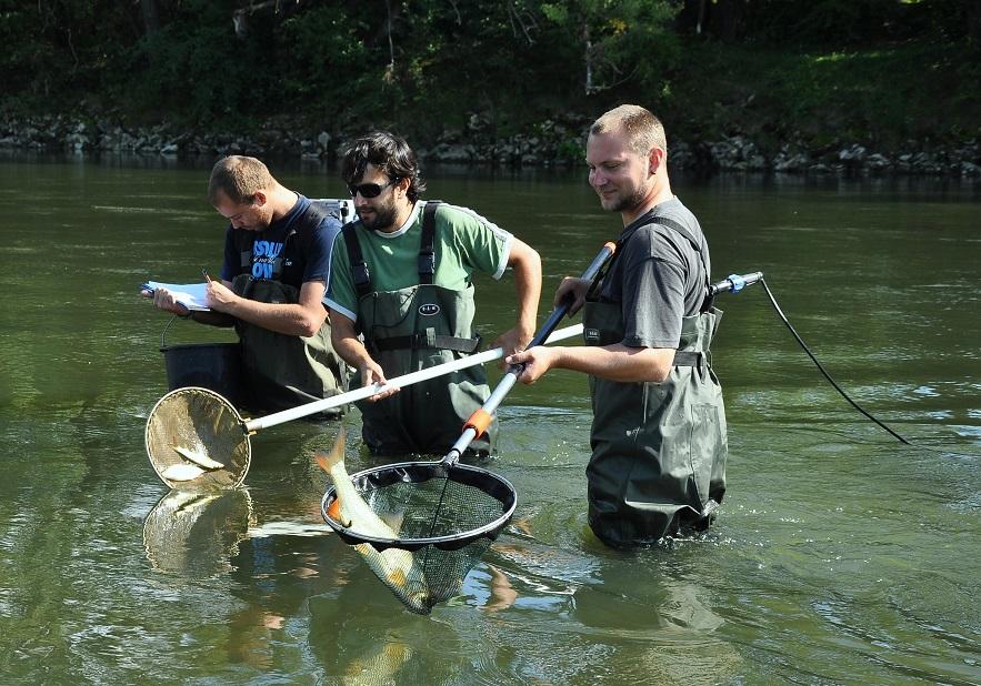Poškození ryb elektrickým proudem