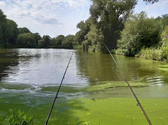 Aktuální přehled opatření pro rybáře: Jak rybařit, pečovat o revír nebo získat první rybářský lístek?