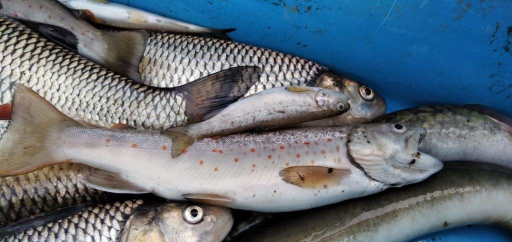 Úředníci nezjistili příčinu úhynu ryb na Chrudimce, čistička za tím podle nich není