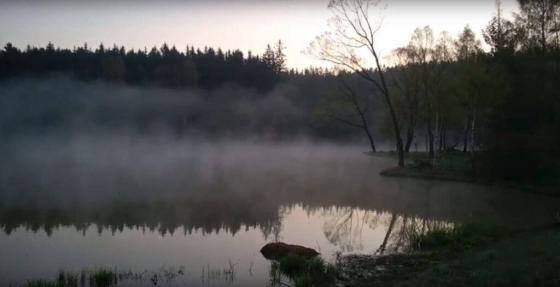 Video: kouzelné ráno u vody