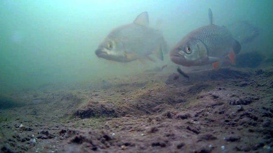 Video: na návštěvě v řece