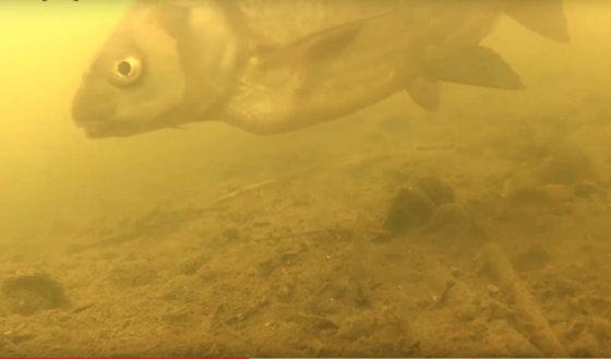 Video: krátký pohled pod hladinu jezera