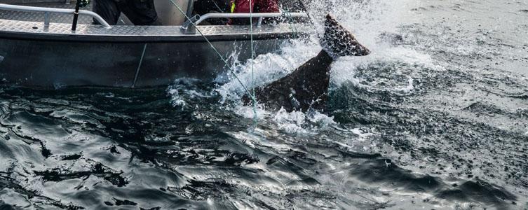 Video: Rybolov v Hasfjordu