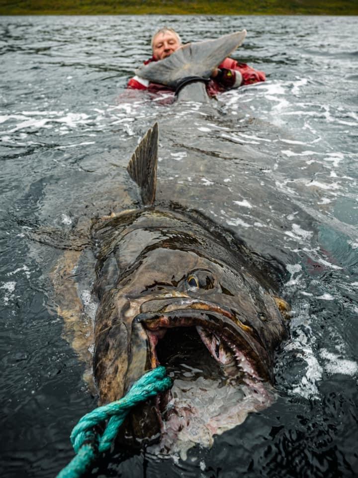 Nový rekord halibuta 231cm