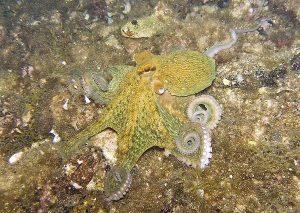 chobotnice5