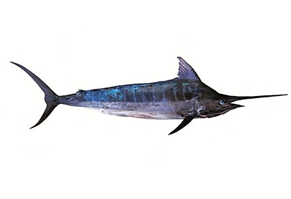 webové stránky velké ryby mobilní datování Indie zdarma